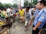 狗肉节如期而至摊位翻倍 市民与爱狗者激辩