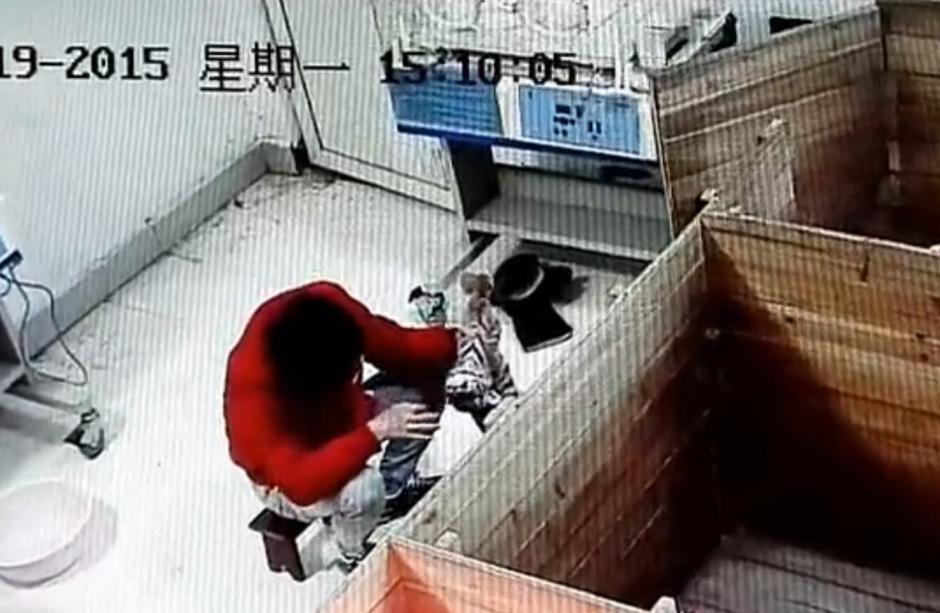 南昌动物园饲养员虐待新生华南虎-酷我图片