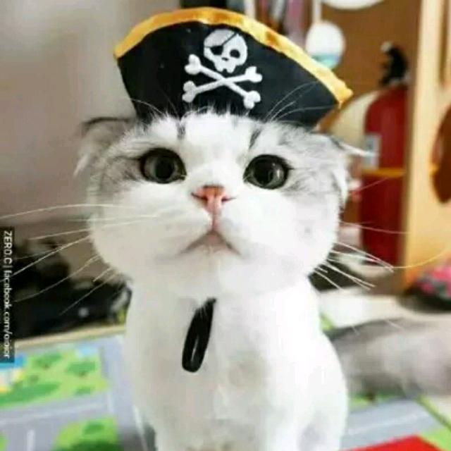 给我看小猫可爱的图片