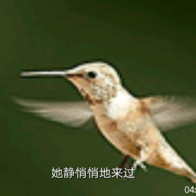 psy鸟�9�%9e,y/&_江南style   psy